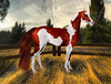 Elite Equestrian's Helios Coat for the RealHorse - Big Red (honeyheart1) Tags: realhorse horse equine skin fur coat hair pinto paint sabino overo sl secondlife whitehorsehollow helios elite equestrian