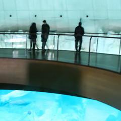 igloo (Maluni) Tags: valencia spain espana spagna acquarium