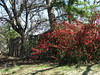 Flowering Bushes (jHc__johart) Tags: bush shrub bloom flower oklahoma