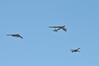 DSC_8974 (Tim Beach) Tags: 2017 barksdale defenders liberty air show b52 b52h blue angels b29 b17 b25 e4 jet bomber strategic airplane aircraft