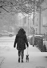 Snow Walk (purplepheonixx) Tags: snow walking dog puppy blackandwhite leicestershire nikon urban child cute