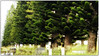 Trees at Cambridge Cemetery. East London, South Africa (Finepixtrix) Tags: trees conifers headstones graveyard cemetary eastlondon buffalocity southafrica cambridge graves