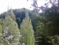 Primavera (Gilbert-Noël Sfeir Mont-Liban) Tags: frühling primavera printemps kesserwan montliban liban mountlebanon lebanon berg montagne mountain bäume arbres trees spring