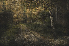 The Journey Ahead (unciepaul) Tags: autumn longwalkbutworthit trees leaves path colours borrowed camera bedford perlieus cant spell right muddy ground