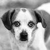 Rumor10Mar201876-Edit.jpg (fredstrobel) Tags: dogs pawsatanta phototype atlanta blackandwhite usa animals ga pets places pawsdogs decatur georgia unitedstates us