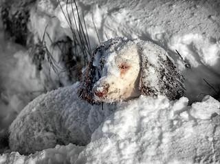 Fun in the snow (2)