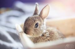 Thor (Ark. Us.) Tags: baby rabbit bunny cute little light fur animal pet portrait eye rescued