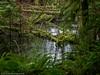 Wetland (Ramona H) Tags: stimpsonpreserve usa washington washingtonstate whatcomcounty hiking rain trail wetland wet green ferns moss