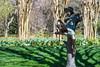 Statue In Gibbs Garden (1) (幻影留梦) Tags: gibbs garden early spring statue japanese georgia south living sony fe 24105mm f4 g oss lens sel24105g boy girl reading play nature