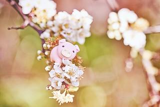 75/365 : Flowers