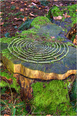 Kreise (Hanspeter Ryser) Tags: landart wald kunst baumstrunk holz moos art kreis laub grün braun schweiz switzerland