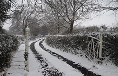 Winter Lane (Hammerhead27) Tags: weather cold somerset march view tree white winding gate road lane ice snow winter