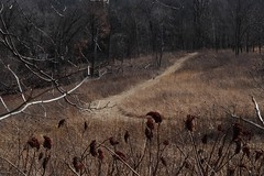 a walk in the woods (humbletree) Tags: madisonwisconsin owenparkconservancy