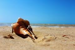 IMG_3529 (Tonika.) Tags: conch seashell beach playa arena sand stones ocean mar colombia concha camarones la guajira photography canonphoto canon canoncamera camera