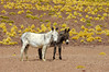 Donkeys (Gregor  Samsa) Tags: argentina argentinian trip roadtrip journey exploration adventure outdoors scenery scenic altiplano barren eerie landscape highaltitude settlement
