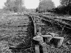 Trunk Route (Jason_Hood) Tags: monochrome blackandwhite disused abandoned railway railroad southstaffordshireline southstaffordshirerailway
