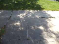 Partial Solar Eclipse Shadow (Brandon Blahnik) Tags: partial solar eclipse crescent shaped shadow driveway