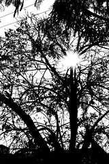 #summer #shades #hyd #yellow #bnw #silhoutte #canon #trees #nature (prakhar007fly) Tags: summer nature canon silhoutte shades hyd yellow bnw trees