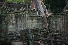 Alien or Roots? (preze) Tags: preahkhan angkor siemreapprovince kambodscha cambodia südostasien templeruin tempelruine sandstein ruinen wurzeln roots