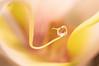'reflection in a drop' (Jeannette Maandag) Tags: waterdrop orchid fragile dof bokeh nature closeup macro extensiontubes fujifilm fujixt20