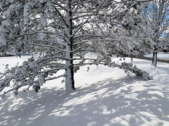 Winter wonderland (Hilarywho) Tags: winter winterwonderland snow tree snowytree snowylandscape