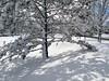 Winter wonderland (Hilarywho) Tags: winter winterwonderland snow tree snowytree snowylandscape