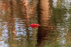 Alone (cstevens2) Tags: water leaf autumn fall red reflections trees herfst bomen blad rood weerspiegeling ravels belgië belgium belgique