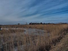 P3043133 (fab2007) Tags: outdoor broekpolder natuur natur koud polder ice riet clouds vlaardingen