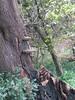 Bracket fungi (wallygrom) Tags: england westsussex worthing ferring angmering a259 highdown highdowngardens highdownhill