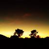 Two Trees (Jeremy Brooks) Tags: california carmelvalley montereycounty silhouette sunset trees usa iphone carmel unitedstates us
