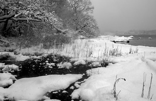Beebe Cove  in a March Snow #2