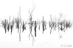 Landscape (Rob Blanken) Tags: