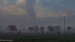 Spirit of cricket (Jhopne) Tags: cricket uae cloud abudhabi canonef2470mmf28lusm fog canoneos5dmarkii silhouette mar18