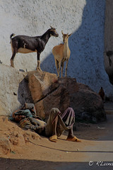 HARAR (RLuna (Charo de la Torre)) Tags: etiopia abisinia ethiopie abesha farangi africa nilo waterfall cascada addisabeba bahardar gondar axum lalibela ortodoxo oromo amara konso hammer mursi ari karo banna chamo chencha dorze turmi wareta dimeka arbaminch weyto omo jinka travel trip vacaciones canon photo landscape harar khat market rluna rluna1982 ethiopianairlines ramadan muslim musulman ecologia medioambiente naturaleza nature cultura instagram flickr spotlight instagramapp photography portrait people me camera natural igers igersspain igersmadrid