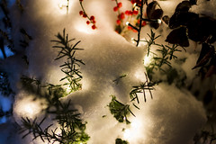 snow lay on lights (freemanphoto) Tags: neve snow luci lights bergamo snowflakes fiocco fiocchidineve italia italy lombardia winter inverno nevicare nevica