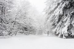 Fraîche promenade (Elie RIVIERE) Tags: arbres brume france froid lajasserie loire nature neige nikond500 pilat