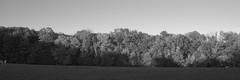 Schwarzenbergpark_2017_27 (rhomboederrippel) Tags: rhomboederrippel fujifilm xe1 october 2017 europe austria vienna 17bezirk 17thdistrict neuwaldegg hernals schwarzenbergpark cloudless sky sunny park tree grass monochrome bw