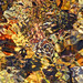 Sunlit water flowing over pebbles in a stream in the University of Wisconsin-Madison Arboretum 02-26-2018 024