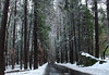 A brisk winter walk in March (Chief Bwana) Tags: ca california sierra sierranevada yosemitevalley yosemite yosemitenationalpark nationalparks hiking forest snow winter mirrorlake psa104 chiefbwana