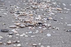 Strandgut (Sockenhummel) Tags: zingst ostsee strand ferien fuji xt10 balticsea muscheln shells sand strandgut beach