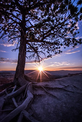 Just in Time (PixStone) Tags: sunrise utah bryce national park america usa burst sun sunstar sunburst colors morning nature inspiration point landscape roots tree mountain hoodoo canyon geographic nikon dslr d7100 just time pierre bader