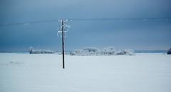 Frosty... (Koku85) Tags: winter post frost snow