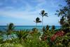 ... lost (Francoise100) Tags: tropical palm flowers vivid colors vegetation trees ocean water beach arbres tropiques palmiers couleurs flora blooms fleurs sky ciel zanzibar island horizon paradise