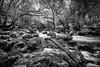 River Plym Dewerstone Wood - Dartmoor (pm69photography.uk) Tags: dewerstone woods river dartmoor longexposure bw blackandwhite nikond810 tamron1530mm 1530mmtamron nikon analogeffexpro riverplym moody atmospheric atmosphere erie