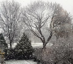 Let it snow!!!☃❄☃ (LeanneHall3 :-)) Tags: snow snowing snowflakes trees branches eastpark hull kingstonuponhull landscape samsung galaxys7edge