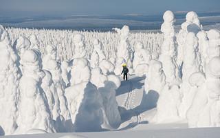 In the winter wonderland