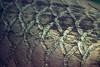 Arapaima (Juanedc) Tags: actuariodezaragoza aragón españa europa europe expo saragossa spain zaragoza acuario acuatico aquarium aquatic arapaima fish pez