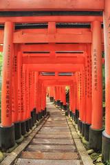 Fushimi Inari Taisha (伏見稻荷大社)Kyoto (cattan2011) Tags: temples artwork art japan traveltuesday travelphotography travelbloggers travel landscapephotography landscape 日本 京东 fushimiinaritaisha 伏見稻荷大社 kyoto