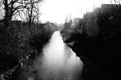 Shining creek (stefankamert) Tags: stefankamert shining creek noir noiretblanc blackandwhite blackwhite bw baw light highcontrast tones refections landscape tree