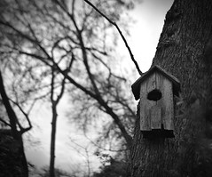 Birdhouse (dr_scholz@ymail.com) Tags: birdhouse tree wood outdoors winter sky blackwhite blackandwhite decay leicam240 summicron35mmf2asph summicronm
